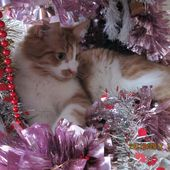 chat-pin de Noël - crea.vlgomez.photographe et bricoleuse touche à tout.over-blog.com