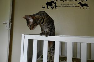 Chats: insecticides, huiles essentielles...