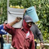 La révolte des ouvriers agricoles de San Quintin - coco Magnanville