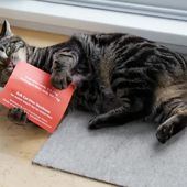 Watch Cats Basically Hump Direct Mail Coated With Kitty Crack