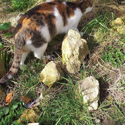 les chats au jardin fleuri; Victoria Lyn
