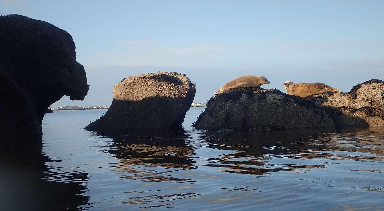 Les Etocs : rencontre hivernale avec les phoques