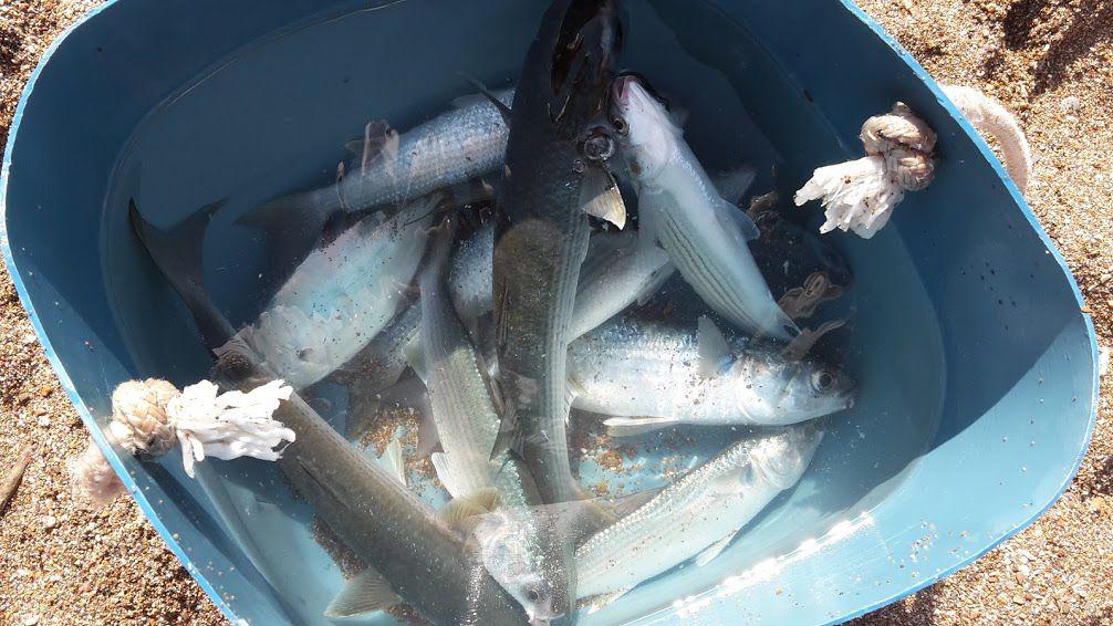 Humour Pêche: Des poissons à gogo