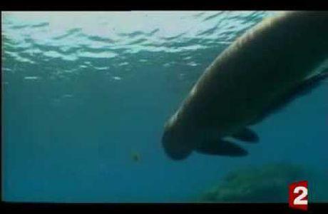 Sauvez le dugong!