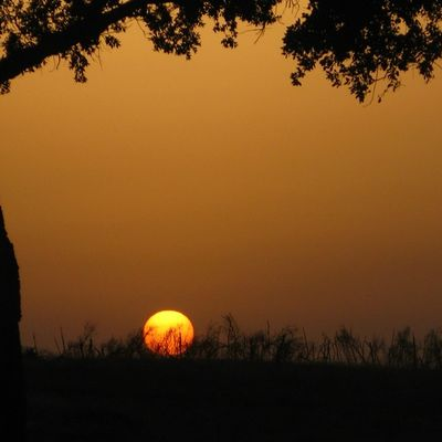 Un coucher de soleil dans les terres intérieures de la baie de Guerbes (wilaya de Skikda)