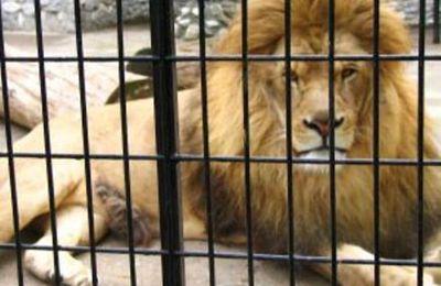 """""""La gabbia dei leoni"""", racconto di Emilio Rega"""