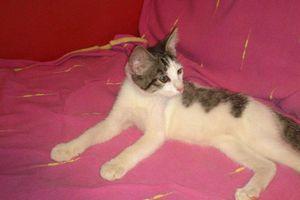 WILLOW - chaton né le 01/06/2017 - adopté