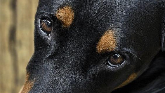 Hérault : Il tente de noyer sa chienne après l'avoir droguée et écope de 4 mois de prison avec sursis