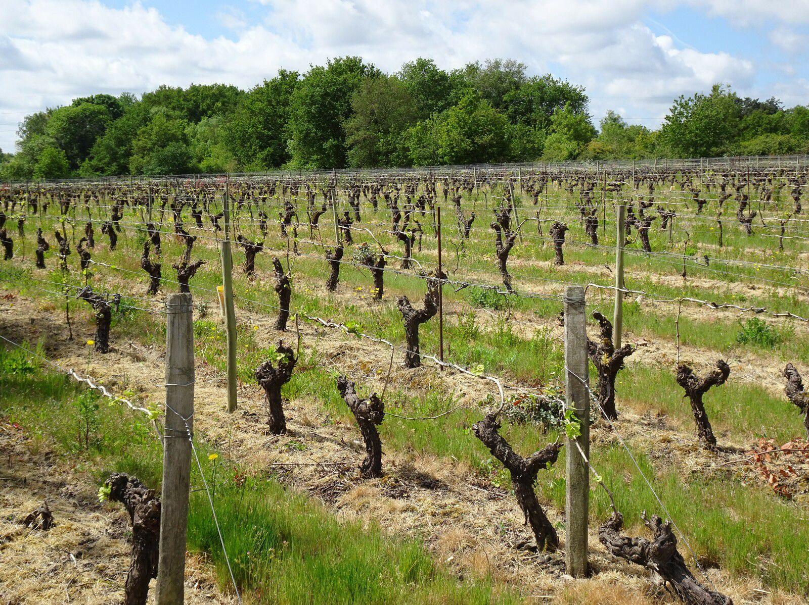 La Sèvre et le Vignoble de Nantes à Clisson - 64,5 km - A.R
