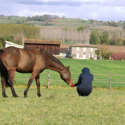 Apprendre à connaître son cheval