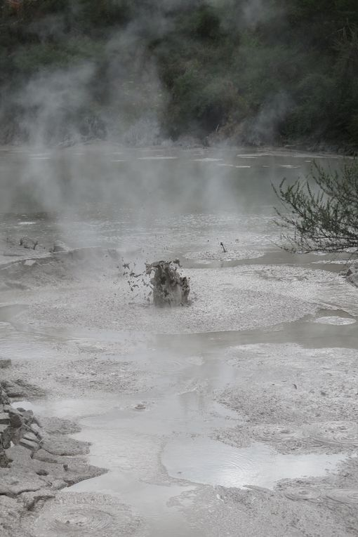 Hobbiton countryside, Rotorua: mud pools, sulfur pools, warm river with little red worms, fancy a bath?