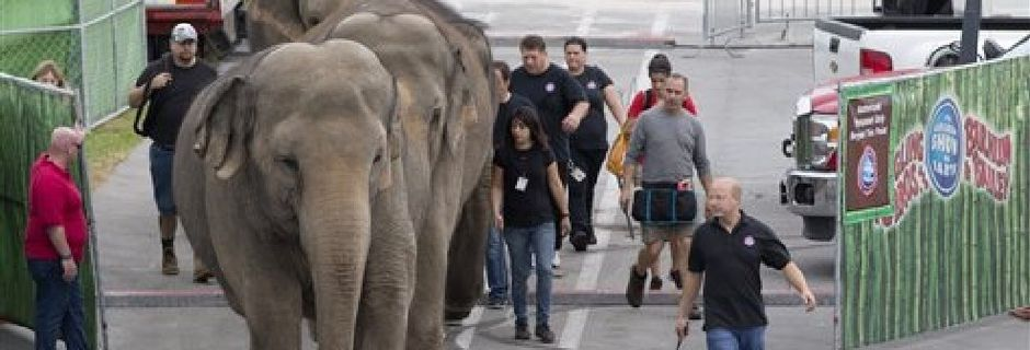 Ringling circus elephants to retire, be used in cancer research at University of Utah