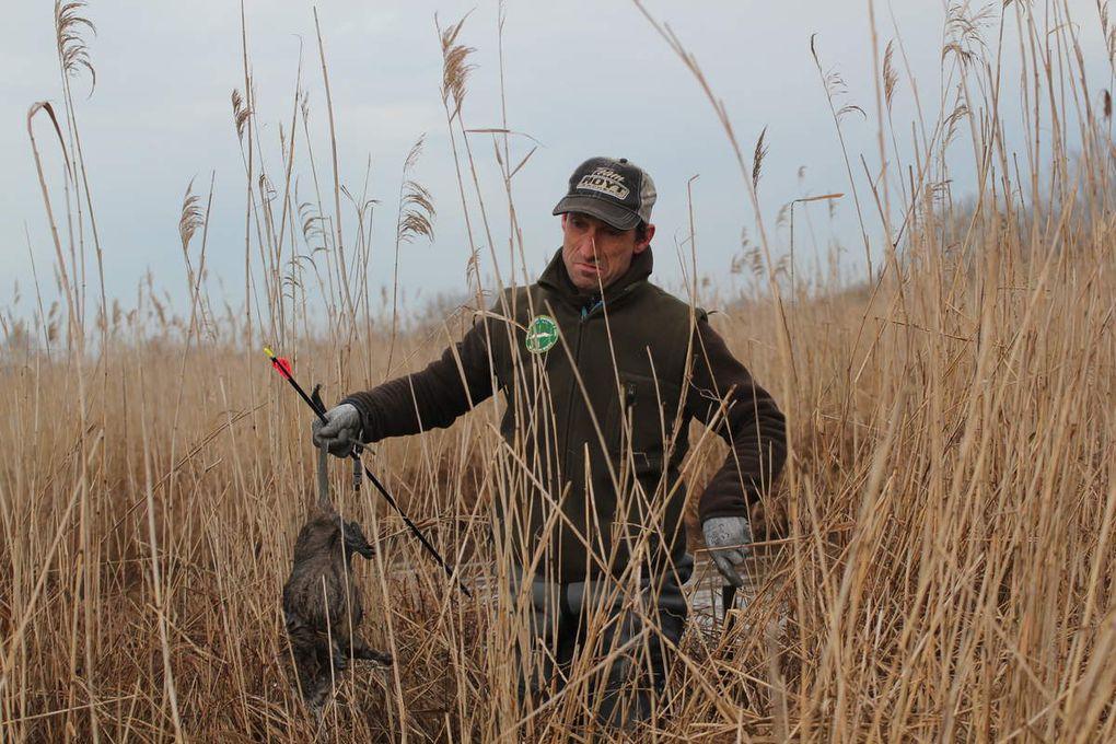 chasse aux ragondins dans les reserves de grande brière.
