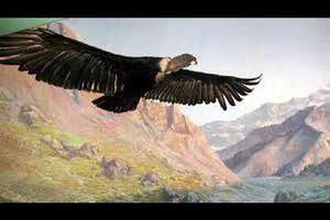 """""""El Condor""""- Simon & Garfunkel (vidéo)"""