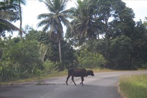 Bords de route... Mayotte