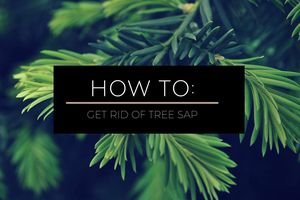 Guide on Removing Tree Sap from Any Surface