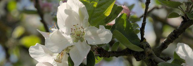 En blanc et rose..