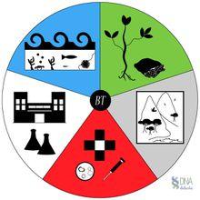 APLICACIONES DE LA BIOTECNOLOGÍA...y tu ya sabes a cual te quieres dedicar?