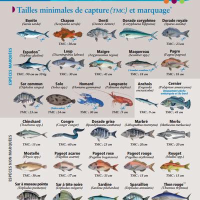 Guide à l'usage de la pêche de loisir