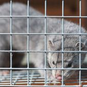 Sign Petition: The U.S. fur industry is built on the torture, neglect, and gruesome murder of animals