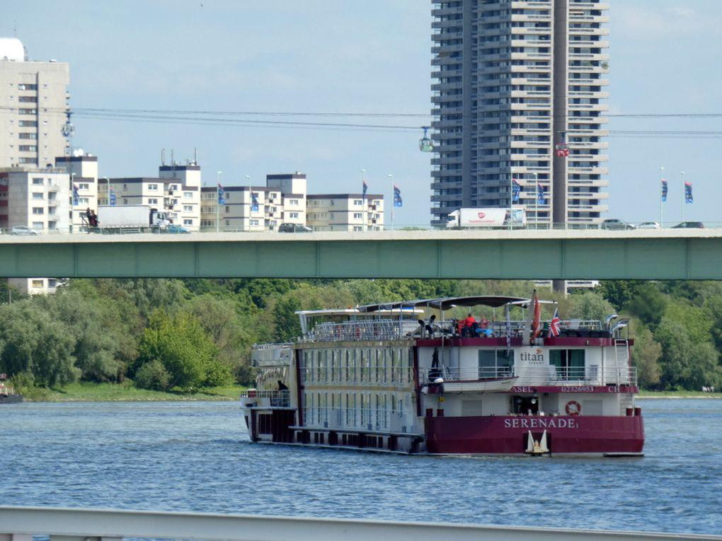 SERENADE , paquebot de croisière fluviale sur le Rhin , au passage de Cologne (Allemagne) le 31 mai 2019