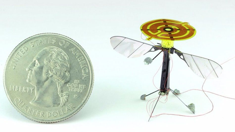 The robot bee with its electrostatic adhesion pad on on the right.