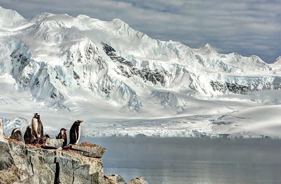 ** Phoque , Pingouin Morse...