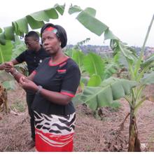 Les femmes africaines sont à la tête de l'avancée de la biotechnologie sur le continent