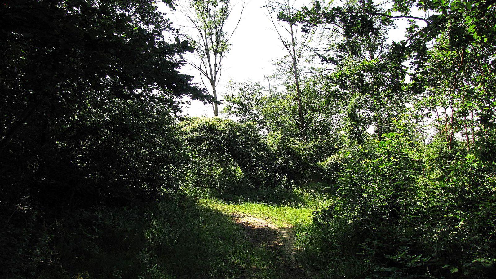 carrefour_Route du Mont des Singes_Chemin de la Forêt Saint-Pierre