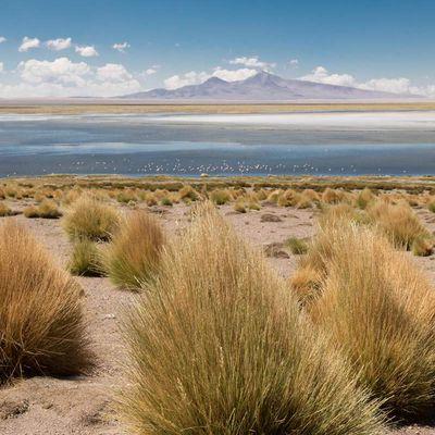 San Pedro de Atacama, le salar de Tahar
