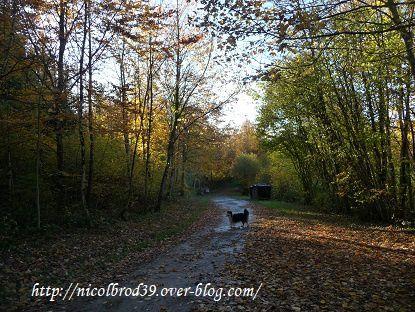 L'automne, les feuilles mortes !