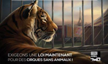 AIX-EN-PROVENCE CONTRE LES ANIMAUX SAUVAGES DANS LES CIRQUES
