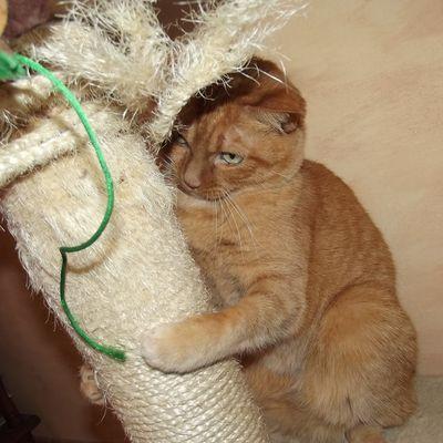 """Blog """"Une belle vie de chat.com"""" /  A l'occasion de la Toussaint... rendre hommage à nos petits compagnons décédés - Et... et si on adoptait un chat noir (ou pas !) : voir jolie  vidéo de la SPA)"""
