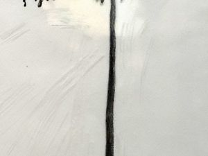 Cesare Léonardi et Franca Stagi - Encre de chine sur papier calque - dans les années 1960 et 1970, ils réalisent 374 dessins à l'échelle 1/100 de spécimen d'arbres avec et sans feuillage. Le dessin permet de synthétiser les traits distinctifs de chaque arbre