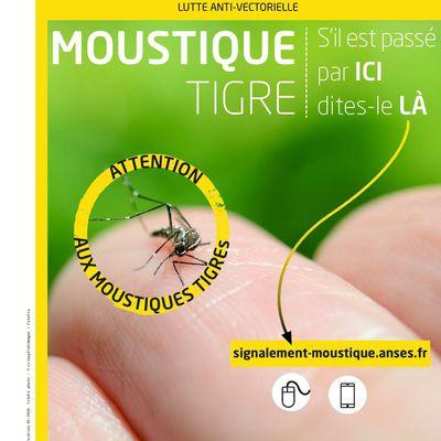 Moustique Tigre : Signalement et réflexes à adopter