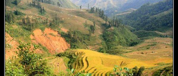 Vietnam : rizières au pays des H'mongs