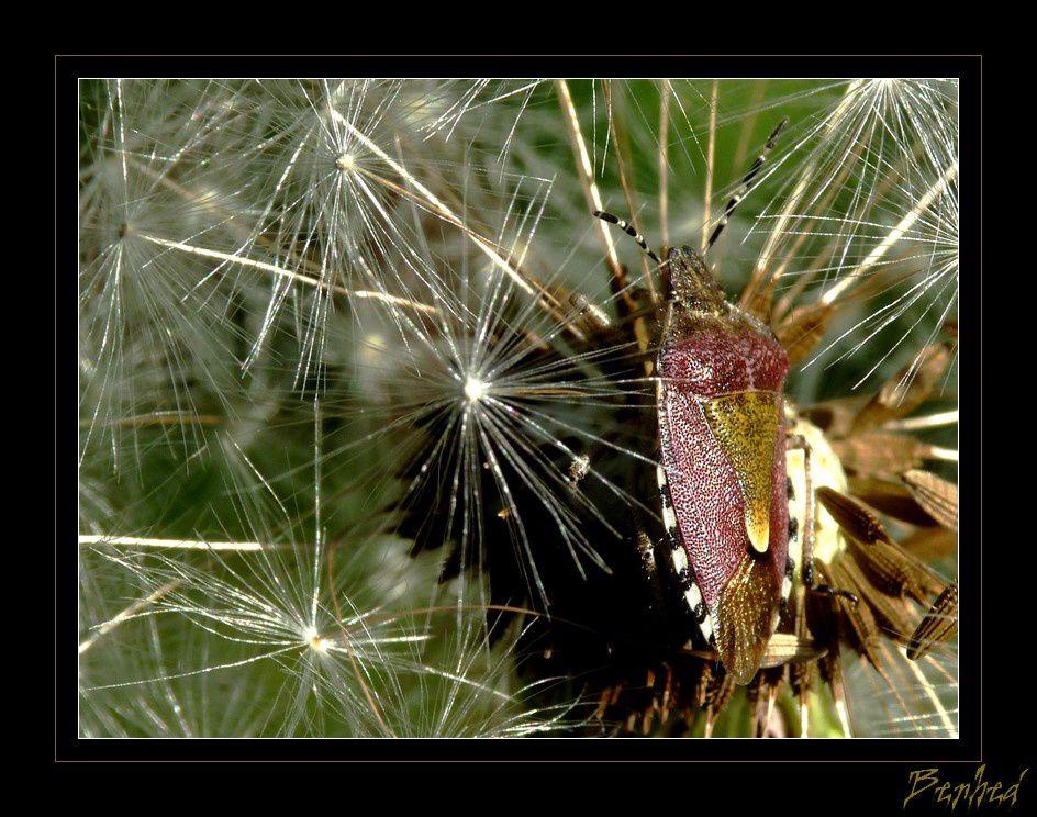 passion animaux,insectes,fleurs et jardins