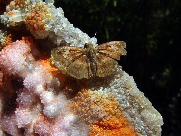 Amethyst Flower from Irai, Rio Grande do Sul, Brazil (private collection)