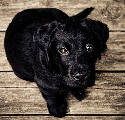 Il Piccolo Cane Nero