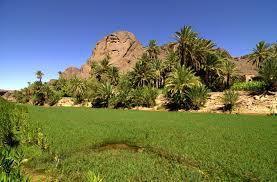 Séjour - balades - randonnées à l'oasis de Fint «Mon beau paradis»