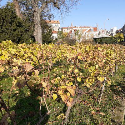 Des nouvelles de la vigne et de notre future cuvée