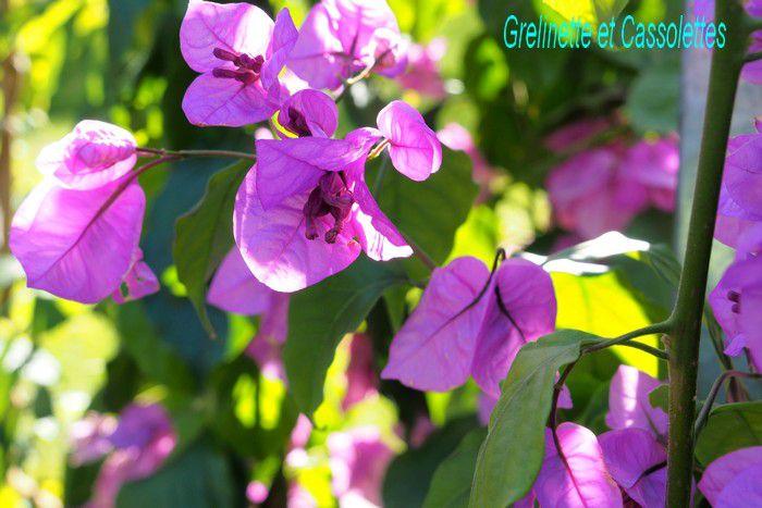 Ambiances des Journées des Plantes de Chantilly