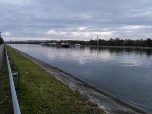 C'était le mercredi 21 octobre, randonnée vers l'Île du Rhin et la Petite Camargue alsacienne