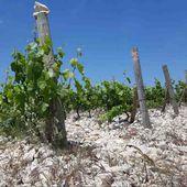 Domaine Stina : Bol, île de Brač (Dalmatie : Croatie) - Photos et Vins (Plaisir et Passion)