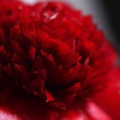 Voir Rouge... - ©By Evelyne, Tout Simplement..