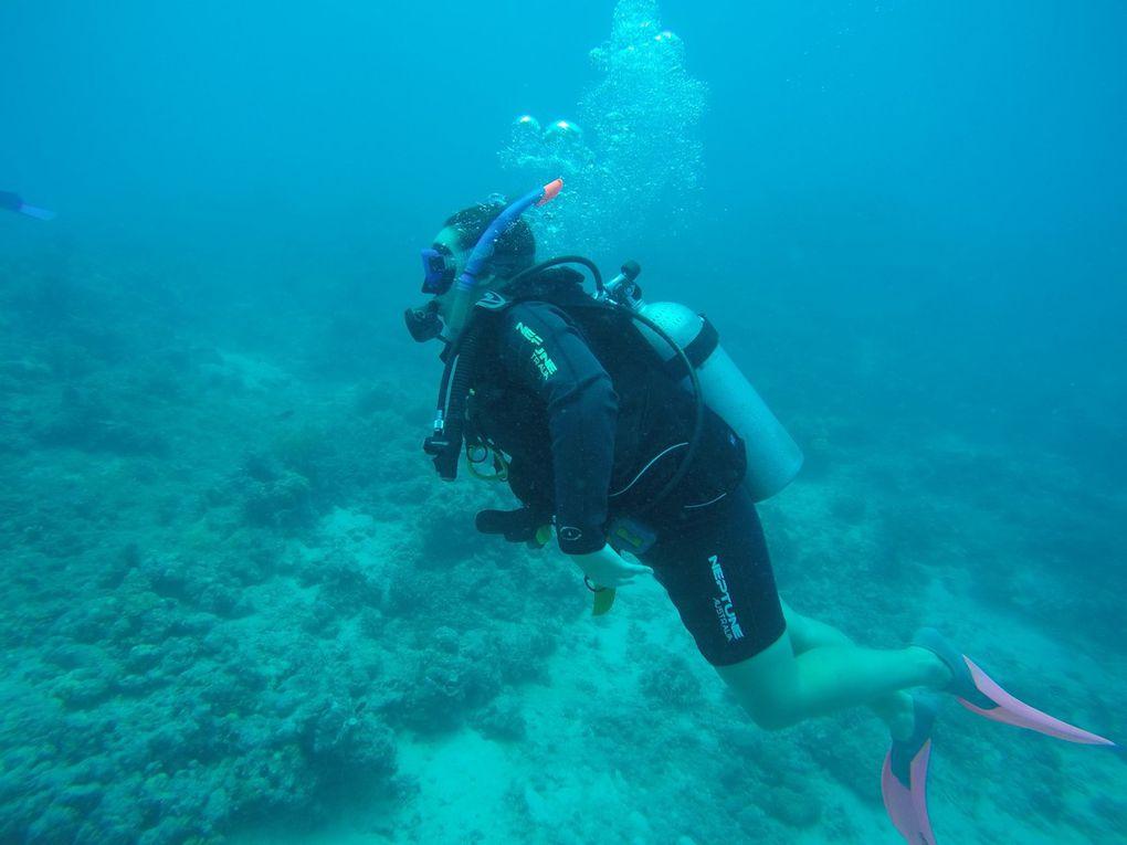 Sortie sur la grande barrière de corail