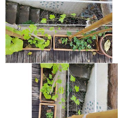 Des vertes et des pas mûres