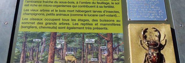 La forêt des Cèdres du Petit Luberon (3) / Le Chemin aménagé des Cèdres