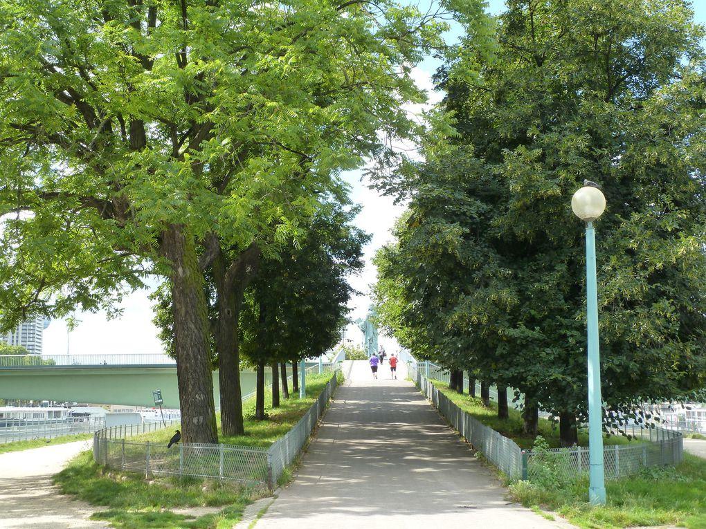 Lîle aux Cygnes, qui mesure 890 mètres de long sur une largeur de 11 mètres, est parcourue de bout en bout par une allée plantée de deux rangées d'arbres.