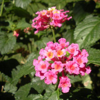 Parmi les corolles des fleurs et des papillons, le jardin ethnobotanique de  Cuernavaca